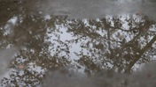 Raindrops on Puddle