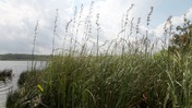 An Isle of Grass Near St. Marks River