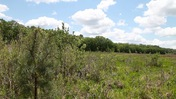 Panoramic view of May's Prairie