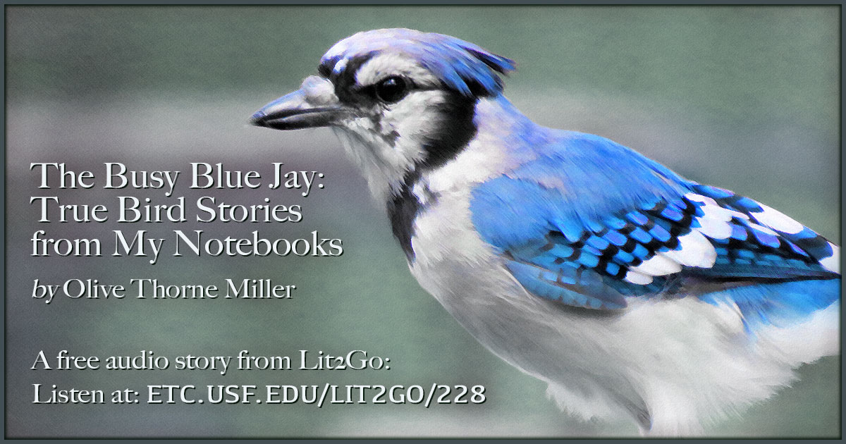 The Busy Blue Jay True Bird Stories From My Notebooks Olive