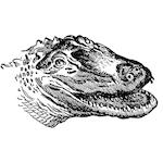 American Naturalist: Rambles in Florida